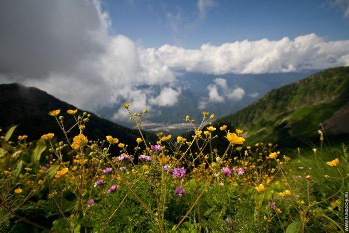 Вид с тропы «Альпийские луга» на долину реки Мзымта, Горки Город