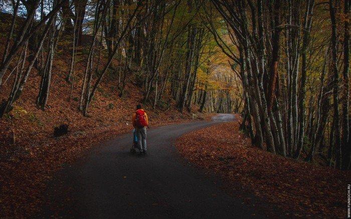 Маршруты для прогулки с детьми по красивейшим маршрутам в Красной Поляне, Сочи
